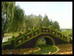 """''Le pont"""" topiaires en mousse de sphaigne (en Chine)"""