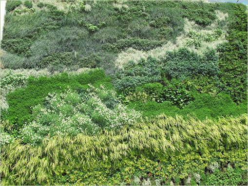 Mur végétal Weybrigde London